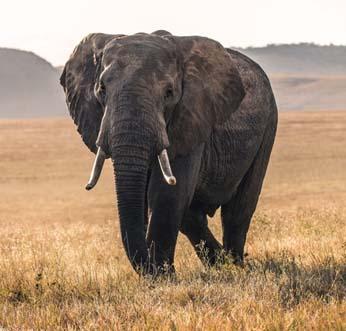 National Wildlife Day Photo of Elephant