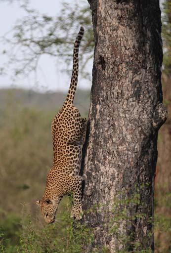National Wildlife Day - September 4, 2020 1