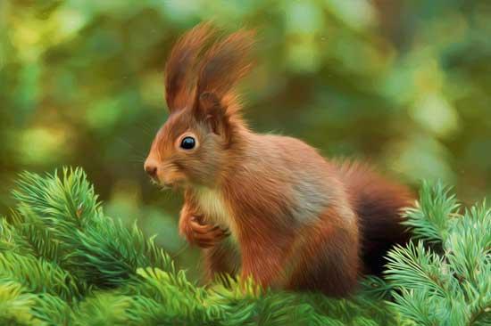 Squirrel Appreciation Day Image