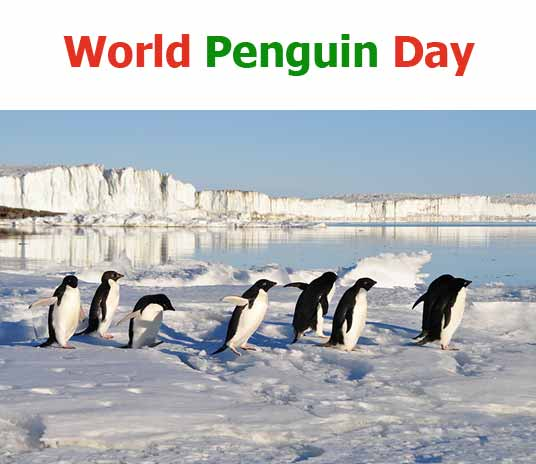 World Penguin Day 2020